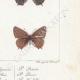 DETAILS 06 | Butterflies of Europe - Polyommate