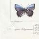 DETAILS 07 | Butterflies of Europe - Polyommate