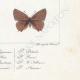 DETAILS 08 | Butterflies of Europe - Polyommate