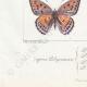 DÉTAILS 07 | Papillons d'Europe - Polyommate Virgaurea
