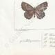 DETTAGLI 07 | Farfalle dall'Europa - Polyommate Thersamon