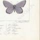 DETTAGLI 08 | Farfalle dall'Europa - Polyommate Thersamon