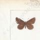 DETTAGLI 01 | Farfalle dall'Europa - Polyommate Eumedon