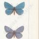DETTAGLI 05 | Farfalle dall'Europa - Polyommate Eumedon