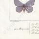DETTAGLI 07 | Farfalle dall'Europa - Polyommate Eumedon