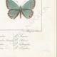 DETTAGLI 08 | Farfalle dall'Europa - Polyommate Eumedon