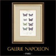Papillons d'Europe - Polyommate Meleager
