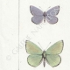 DETAILS 02 | Butterflies of Europe - Polyommate Meleager