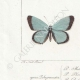 DETAILS 03 | Butterflies of Europe - Polyommate Meleager