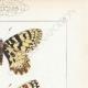DETAILS 04 | Butterflies of Europe - Thaïs Diane - Proserpine