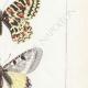 DETAILS 05 | Butterflies of Europe - Thaïs Diane - Proserpine