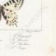 DETAILS 08 | Butterflies of Europe - Thaïs Diane - Proserpine