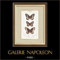 Butterflies of Europe - Satyre - Silène - Hermite - Sylvandre