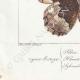 DETTAGLI 07   Farfalle dall'Europa - Satyre - Silène - Hermite - Sylvandre
