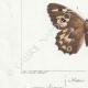 DETAILS 03 | Butterflies of Europe - Satyre Actéon - Agreste