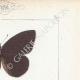 DETAILS 04 | Butterflies of Europe - Satyre Actéon - Agreste