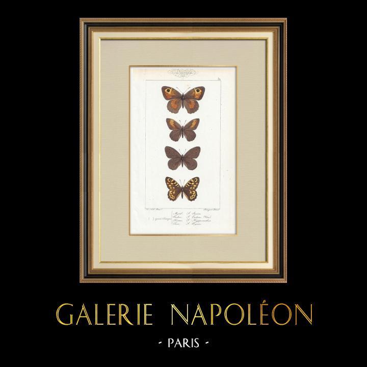 Stampe Antiche & Disegni | Farfalle dall'Europa - Satyre Myrtil | Stampa calcografica | 1834