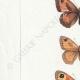 DETAILS 02 | Butterflies of Europe - Satyre Arthusa