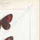 DETTAGLI 04 | Farfalle dall'Europa - Satyre Pharte