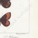DÉTAILS 06 | Papillons d'Europe - Satyre Melampus