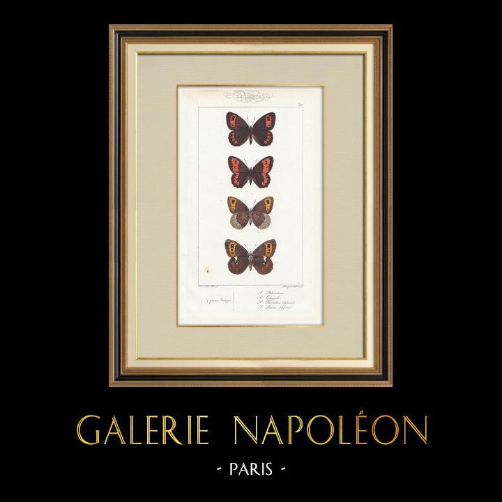 Stampe Antiche & Disegni | Farfalle dall'Europa - Satyre Blandina | Stampa calcografica | 1834