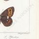 DETTAGLI 06 | Farfalle dall'Europa - Satyre Blandina
