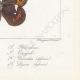 DETTAGLI 08 | Farfalle dall'Europa - Satyre Blandina