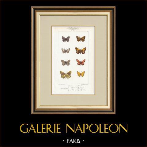 Papillons d'Europe - Hesperie | Gravure originale en taille-douce sur acier d'après A. Noël. Pauquet direxit. Aquarellée à la main. 1834