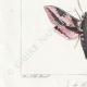 DETTAGLI 03 | Farfalle dall'Europa - Sphinx de l'Argousier