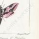 DETTAGLI 06 | Farfalle dall'Europa - Sphinx de l'Argousier