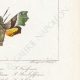 DÉTAILS 06 | Papillons d'Europe - Sphinx Fuciforme