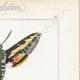 DETAILS 04 | Butterflies of Europe - Sphinx de la Garance
