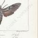 DETAILS 06 | Butterflies of Europe - Sphinx de la Garance