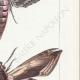 DETTAGLI 05 | Farfalle dall'Europa - Sphinx du Liseron