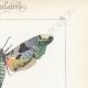DETTAGLI 04 | Farfalle dall'Europa - Sinerinthe du Tilleul