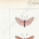DETTAGLI 01   Farfalle dall'Europa - Zygène