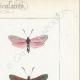DETTAGLI 04   Farfalle dall'Europa - Zygène