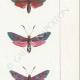 DETTAGLI 05   Farfalle dall'Europa - Zygène