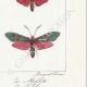 DETTAGLI 06   Farfalle dall'Europa - Zygène