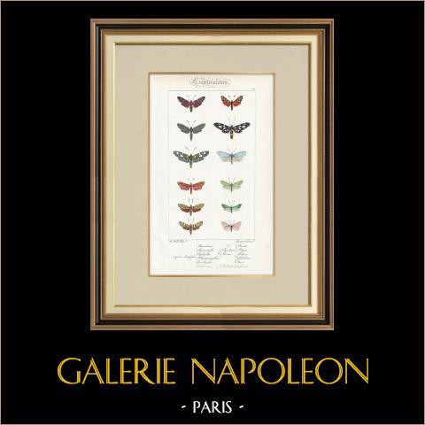 Papillons d'Europe - Zygène Peucedani | Gravure originale en taille-douce sur acier d'après A. Noël. Pauquet direxit. Aquarellée à la main. 1834