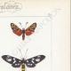 DETALLES 04 | Mariposas Europeas - Zygène Peucedani