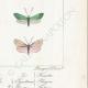 DETALLES 06 | Mariposas Europeas - Zygène Peucedani