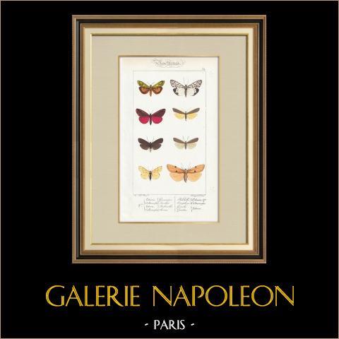 Papillons d'Europe - Lithosie - Callimorphe | Gravure originale en taille-douce sur acier d'après A. Noël. Pauquet direxit. Aquarellée à la main. 1834