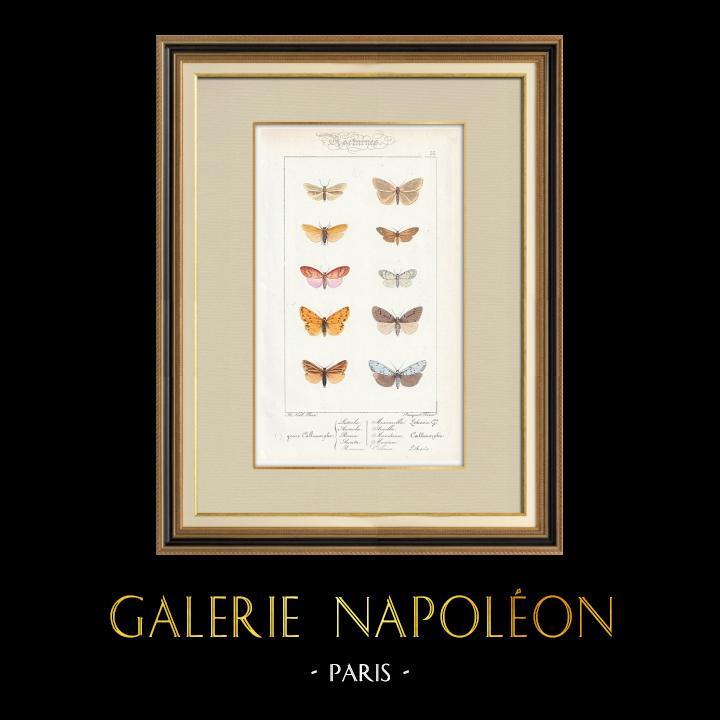 Grabados & Dibujos Antiguos | Mariposas Europeas - Callimorphe | Grabado en talla dulce | 1834