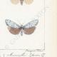 DETALLES 06 | Mariposas Europeas - Callimorphe
