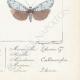 DETALLES 08 | Mariposas Europeas - Callimorphe