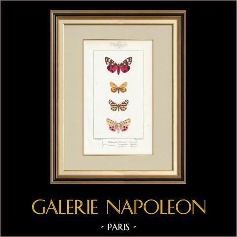 Papillons d'Europe - Callimorphe - Chelonia | Gravure originale en taille-douce sur acier d'après A. Noël. Pauquet direxit. Aquarellée à la main. 1834