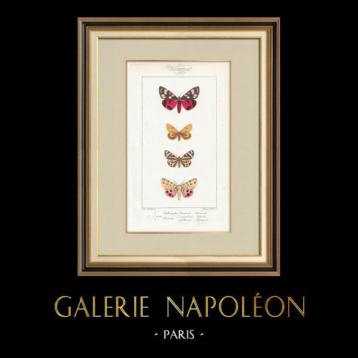 Stampe Antiche & Disegni | Farfalle dall'Europa - Callimorphe - Chelonia | Stampa calcografica | 1834