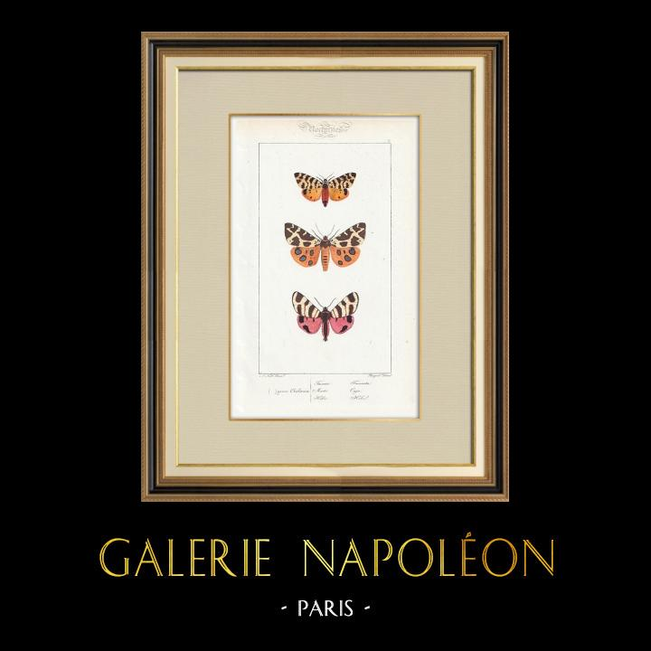 Antique Prints & Drawings | Butterflies of Europe - Chelonia | Intaglio print | 1834