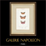 Papillons d'Europe - Chelonia
